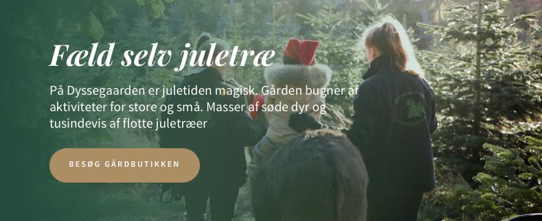 Fælg selv juletræ på Dyssegaarden